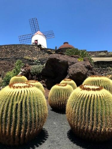 que hacer en lanzarote en pareja jardin cactus