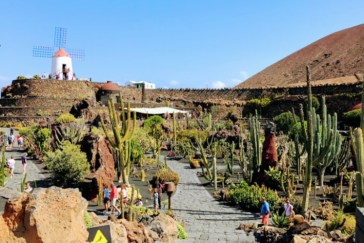 Kaktus Garten Lanzarote