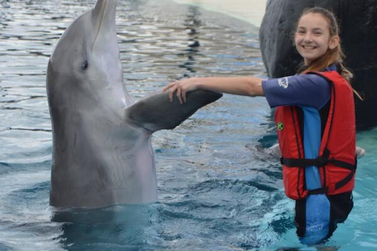 monitora con delfin