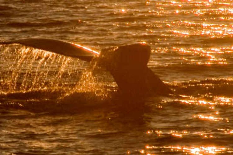 atardecer avistamiento delfines